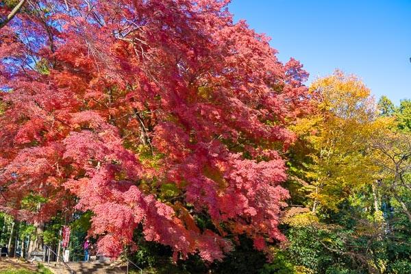 仙台市泉区賀茂神社の紅葉